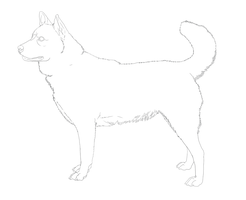 Korean Jindo Line-Art by DoggieDoodles