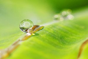 Droplet 68 by josgoh
