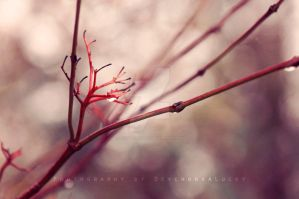 Red Branches by DevchonkaLucky