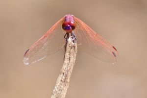 Dassia dragonfly August 2014 2 5 by melrissbrook