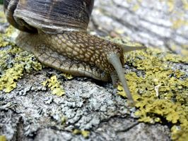 Snail2 by malthe91