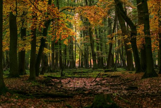 autumn forest by AndiamoMedia