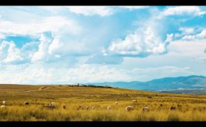 The Country by PortraitOfaLife