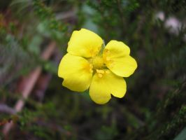 yellow flower by Forgotemme