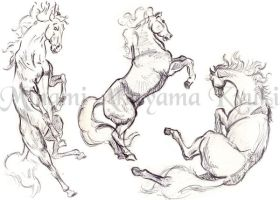 Animal Studies . Horses 2 by Dragon-Rider03
