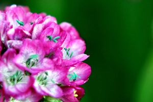 tiny pink flowers by Abbiee1211