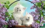Beautiful Cats by XArmonyAngel2012X
