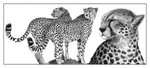 Cheetahs by PencilSessions