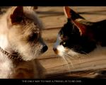 Friendship by cype