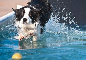 Dog Getting Ball by terryrunion