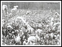 Snow Like a Field of Cotton by GlassHouse-1