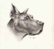 Great Dane by whispering-She-Wolf