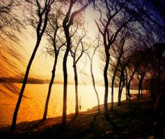 Light behind the trees by Laura-in-china