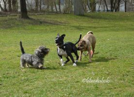 Dogs in Action by bluediabolo