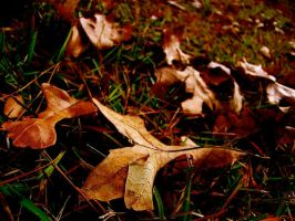 Leaves on the Ground 3 by DevilWillPay10
