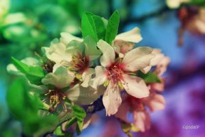 colorful blossom by rosetrace