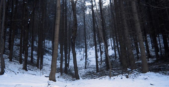 the winter forest by Furious--Angel