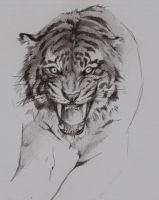Sketch of Tiger by DachitaOokami