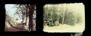 frames and trees by weltengang