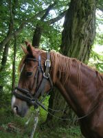 Horses - FK profile by Stock-gallery