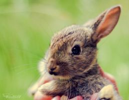 Baby Bunny by FreyaPhotos
