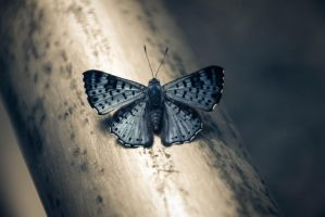 Butterfly by stinebamse