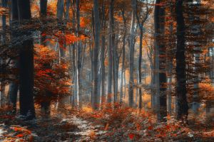 Painting Forest by ildiko-neer