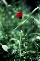 red on green by Anestis9985