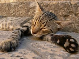 """I'm a Tiger...""  Zzz... by Sobiech"