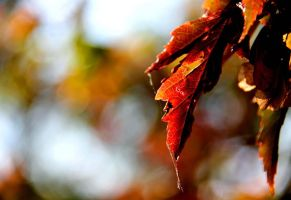 Fall II by designing-Life