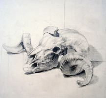 animal skull by dalocska