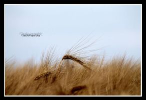 over a barley field by declaudi