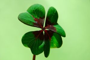 Irish Luck by RowanLewgalon
