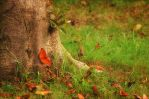 In the dead leaves by apxaia