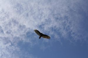 Bird of prey by clberry05