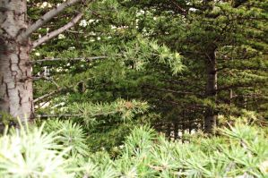 pine trees by ANDMAiYESi1986