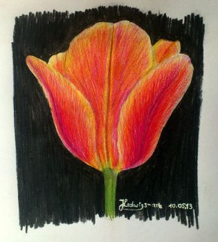 Fire Tulip (Day 131) by Hedwigs-art