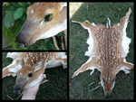 SOLD - Corin - Whitetail Fawn Headdress by Pheasant-Sky