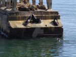 Seals in a abandoned dock by 1987arevalo