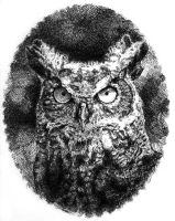 Horned Owl by AGillustration