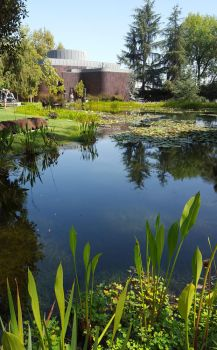 Lovely pond by Wulfe