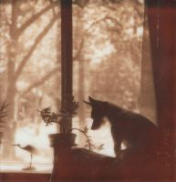 At The Window... by JillAuville