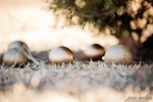 Outdoor Ornaments by JeneeMathes