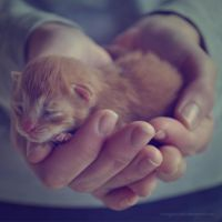 Small red cat by candypumpkin