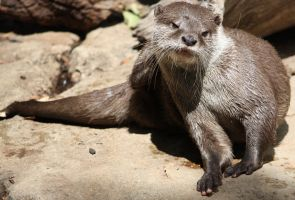 Otter 07 by aussiegal7