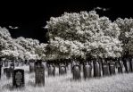 cemetery by vw1956