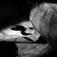 bw leaves by hummingbbird