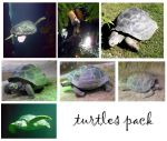 turtles pack by syccas-stock