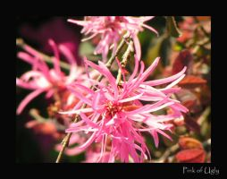 Pink of Ugly by ankashai