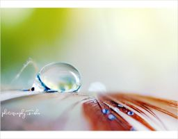 :: Our Life :: by Al3ashAlh